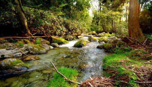【滋賀観光】新緑の大自然が美しすぎる「奥伊吹」を大満喫してきた!
