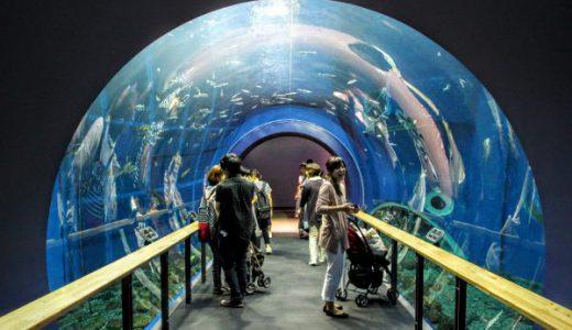 【滋賀の子連れ観光】琵琶湖博物館、日本イチの淡水魚水族館は超楽しかった!