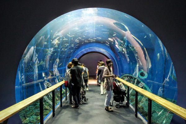 淡水湖のトンネル。インスタ映えすると有名な場所です。