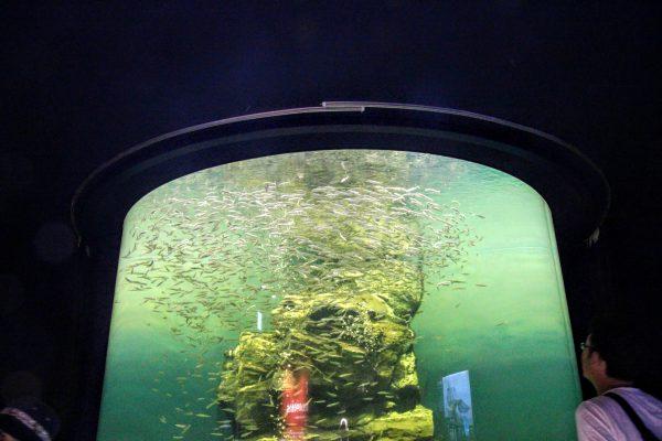 草津の観光スポット「琵琶湖博物館」