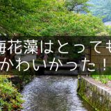 米原の観光スポット「醒ヶ井の梅花藻」