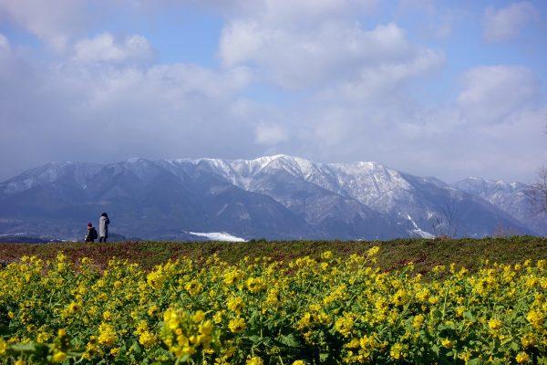 雪山の比良山をバックにするのもまたコントラストがあって美しいですね。