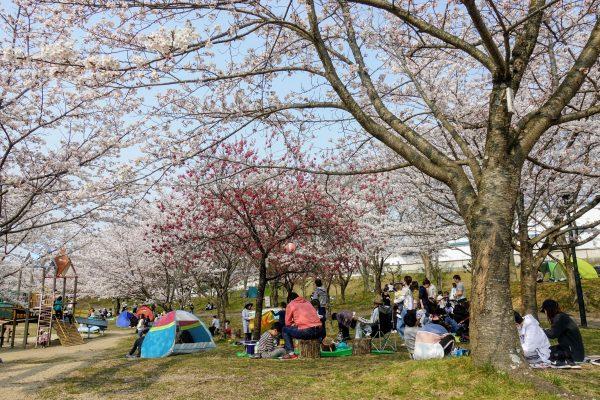 桜の季節に花見客がたくさんいました!